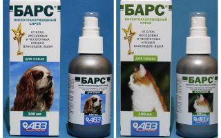 Spray Spray de puces pour chiens et chats