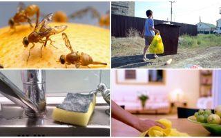 Comment se débarrasser des petites mouches dans l'appartement