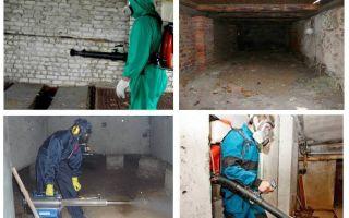 Comment se débarrasser des puces du sous-sol dans l'appartement