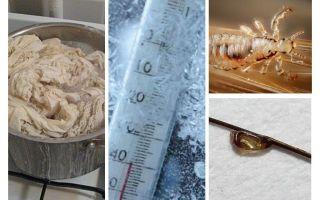 À quelle température meurent les poux et les lentes?