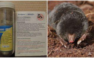 Application Alfos mole