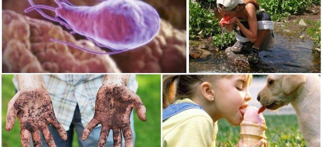Kystes de Giardia dans les matières fécales d'un enfant: à quoi ils ressemblent et comment les traiter