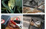 Comment se débarrasser des rats sous le capot d'une voiture