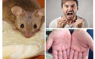 Que peut être infecté par des souris