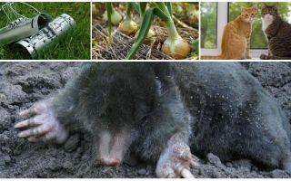 Remèdes pour les taupes dans le chalet d'été et le jardin