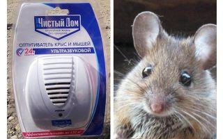 Répulsif ultrasonique de rats et souris Clean house