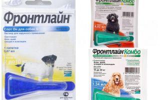 Gouttes frontline de puces pour chiens
