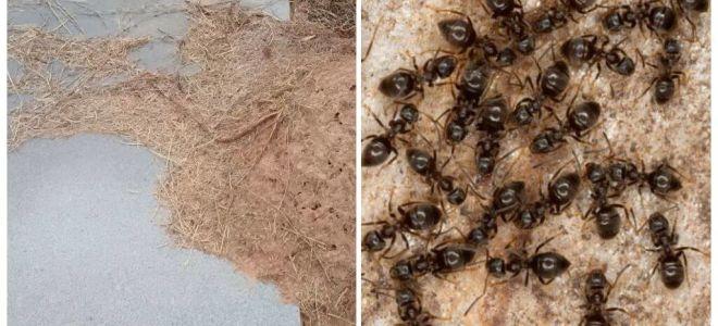 Comment se débarrasser des fourmis sur la tombe