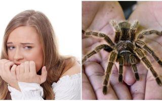 Quel est le nom de la peur des araignées (phobie) et les méthodes de traitement