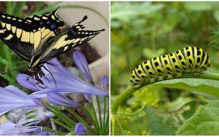 Transformer une chenille en papillon