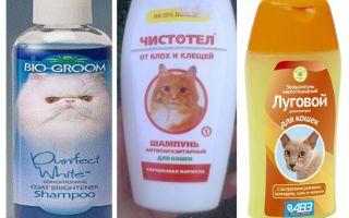 Combien de fois puis-je me laver avec un shampooing aux puces
