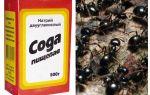 Soda contre les fourmis dans le jardin