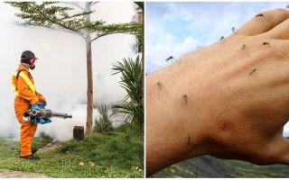 Moyens de traitement de la zone des moustiques et des tiques