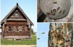 Comment sortir les abeilles de la maison en bois et d'autres endroits