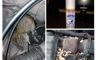 Spray rats pour la voiture