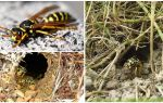 Comment détruire les guêpes de terre et les nids de guêpes dans le sol