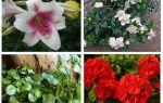 Quelles fleurs effrayer la taupe