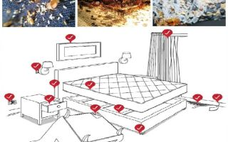Comment gérer indépendamment les punaises de lit dans l'appartement