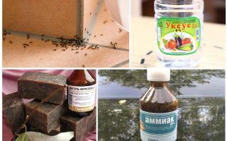 Combattre les fourmis dans une maison ou un appartement