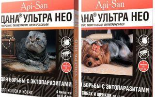 Dana Ultra Neo gouttes de puces pour chiens et chats