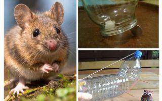 Comment attraper une souris dans une maison sans piège à souris