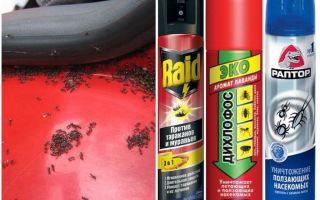 Comment faire sortir les fourmis de la voiture