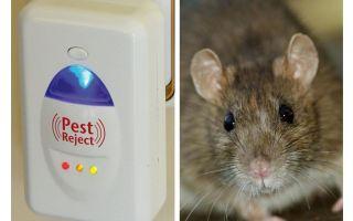 Pest Redzhekt répulsif à ultrasons rongeurs et insectes