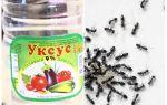 Vinaigre contre les fourmis dans le jardin