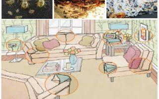 Quoi et comment empoisonner les insectes à la maison