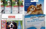 Remèdes contre les puces et les tiques pour les chiens