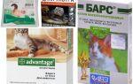 Gouttes sur le garrot des puces pour chats et chatons