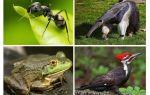Qui mange des fourmis