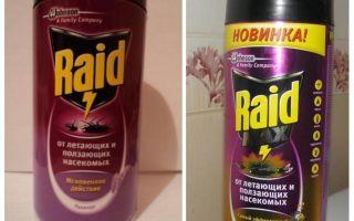 Remède contre les raids au lit