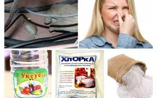Comment se débarrasser de l'odeur de souris