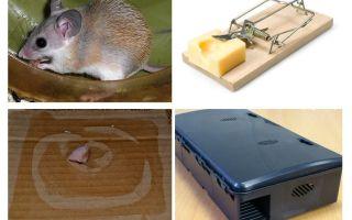 Comment supprimer des souris d'une maison privée