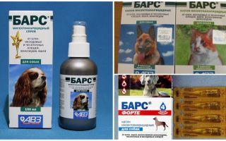 Léopard contre les tiques pour chiens et chats