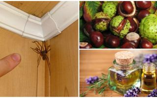 Méthodes et outils pour les araignées dans un appartement ou une maison privée