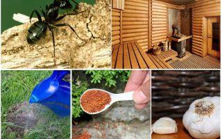 Comment sortir les fourmis du bain