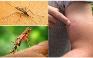 Que faire si un moustique anophèle vous pique