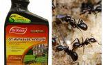 Dr. Klaus des fourmis et des tiques
