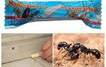 Pencil Masha de fourmis