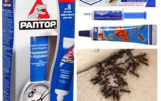 Les meilleurs produits de fourmis
