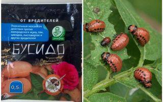 Remède pour le doryphore de Bushido Colorado: mode d'emploi, efficacité, avis