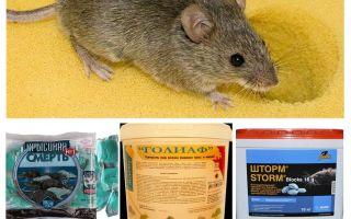 Poison de souris