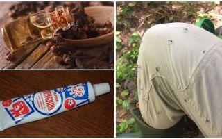 Remèdes populaires pour les moustiques