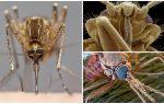 Mosquito dans une vue plus grande