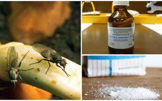 Comment se débarrasser des mouches à oignon