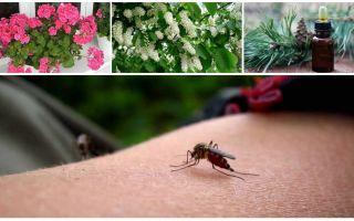 Comment traiter les moustiques dans un appartement ou une maison
