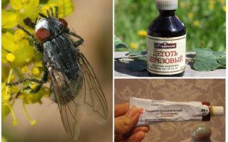Remède pour les mouches à ventre et les mouches à cheval pour les humains