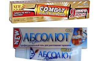 Meilleurs gels pour punaises de lit: Global, Absolute, Fipronil, etc.